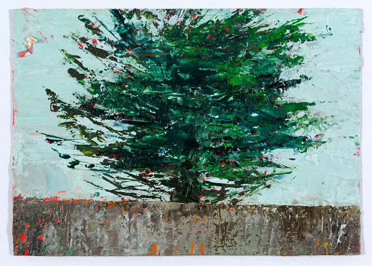 Popping Up Pine, 10.5 x 14.5 cm, Oil on prepared card, 2012